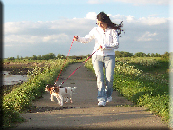 Dog Walking Bookings